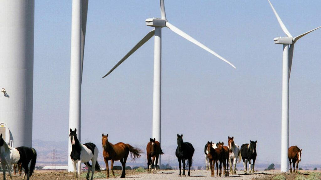 Shiloh wind farm