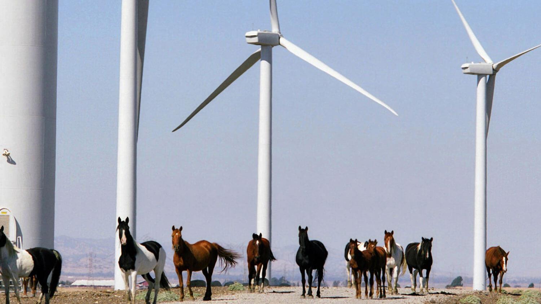 Shiloh wind farm, Solano County, 150 MW